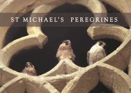 Peregrine Trefoil title Medium